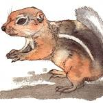 """squirrel"" by lindalou2"