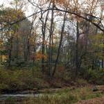 """""""Tree w branch arched over water"""" by Moments2Savor"""