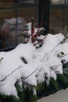 Snow on Christmas greenery