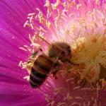 """In the Pollen"" by emele"