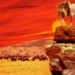 """""""Lion King"""" by coljay"""