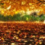 """""""The End of Autumn"""" by thewindypixel"""