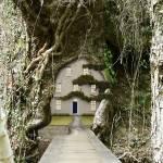 """Tree House"" by coljay"
