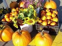 Pumpkins and Flowers 832