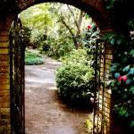 """""""Garden Path"""" by halehmahbod"""