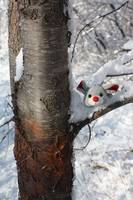 Christmas mouse in a tree 2