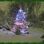 """Spruce with LED lights Frame 2"" by rjg-productions"
