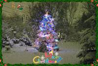 Spruce with holiday lights with text & image added