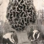 """last giant morel mushroom"" by melroseelkcamp"