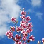 """Spring Sky"" by Lee-Malzard"