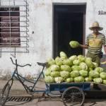 """""""Lettuce Vendor"""" by sostroff"""