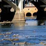 """Under the Bridge"" by PhotographyByRenee"
