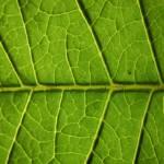 """""""leaf"""" by Joa"""