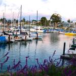 """Pretty Boats - Santa Cruz, CA"" by SusanKessler"