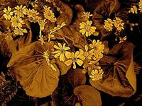 Rich Brown Leave with Yellow flowers