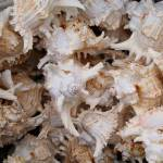 """Sea shells #1"" by andrewmew"