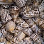 """Sea shells #2"" by andrewmew"