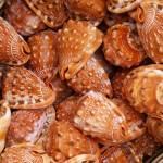 """Sea shells #3"" by andrewmew"