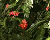 Bromeliad and Hibiscus