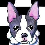 """Boston Terrier"" by KiniArt"