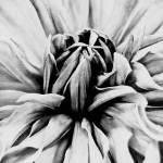 """""""Fleur"""" by joiedevivrephoto"""