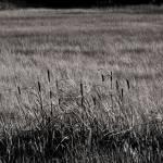 """Landscape-9190"" by OverNantucket"