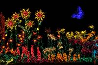 Holiday Garden Lights Display JSC3773