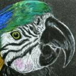 """blue & gold macaw"" by Enchantments"