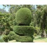 """Plant Art"" by dreamarts"