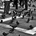 """Pigeons are People too"" by jkeller1003"