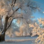 """Nebraska Winter Wonderland"" by panhandlepics"