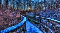 Winter in the Great Swamp