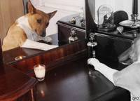Basenji in the Mirror