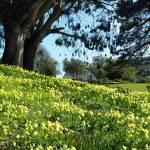 """Spring"" by halehmahbod"