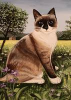 The Snowshoe Cat