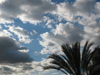 clouds and palmtree in glendale