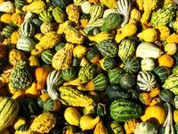 Gourds and Shapes_3122
