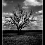 """""""The memory of Trees"""" by touchartist"""