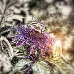 """Florival - Glow"" by JamieRood"