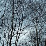 """Trees Against the Sky"" by hschwalen"