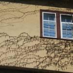 """""""Austrian Window"""" by GEEDEESIGN"""