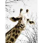 """Giraffe Print"" by JamesGambsPhotography"