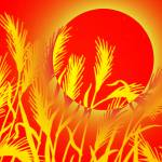 """Sun Wheat"" by Juany"