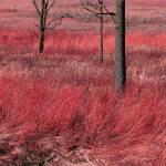 """prairie"" by augis"