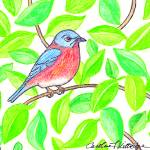 """EasternBluebird_CFKittredge"" by KittredgeCreative"