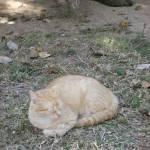 """Cuban Cat"" by ErictheElder"