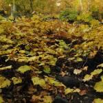 """beaver creek fall leaves"" by sda81169"