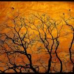 """Marmalade Sky"" by leslieguinan"