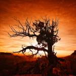 """""""Yggdrasil Inferno"""" by LeeSie"""