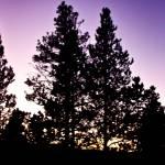 """""""Purple skies"""" by lchik"""